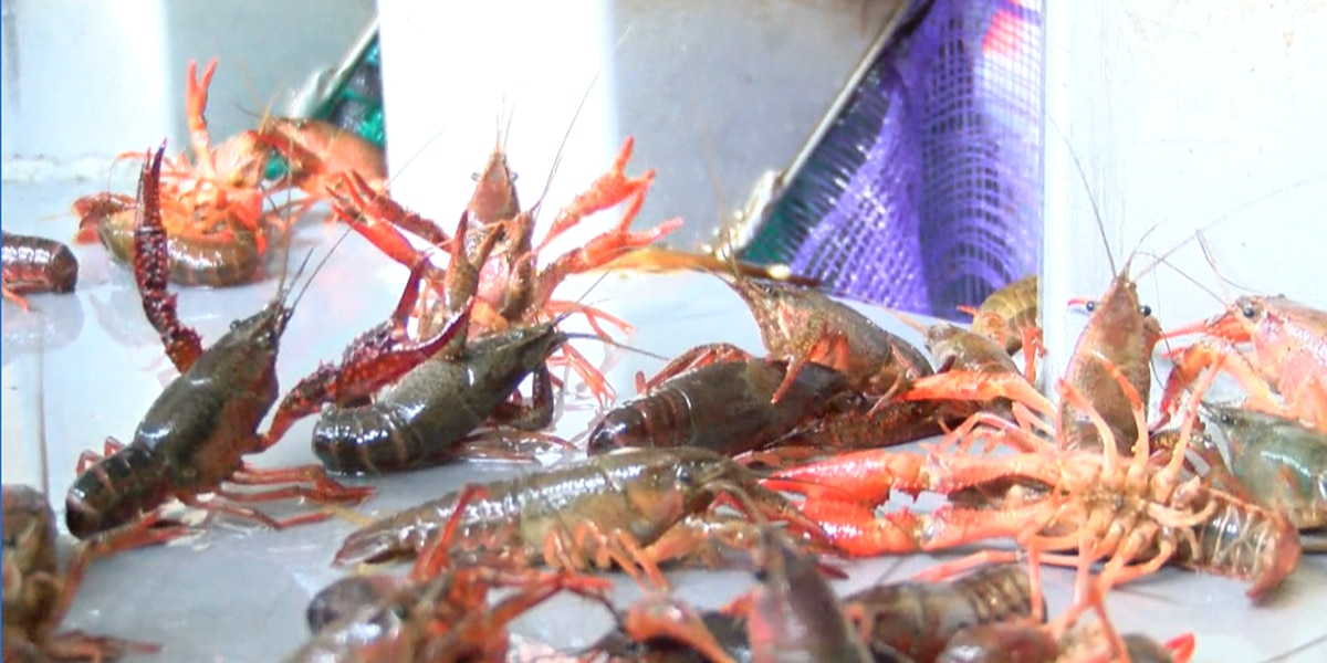 USDA and LSU Agricultural Center document amount of crawfish