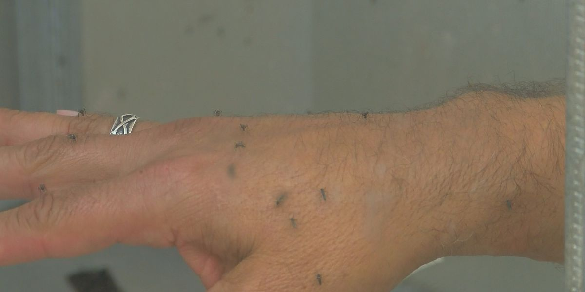 Mosquito bites could lead to 'skeeter syndrome'