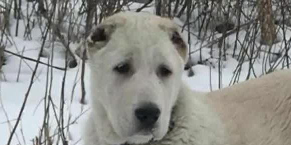 Puppy dies during transcontinental flight