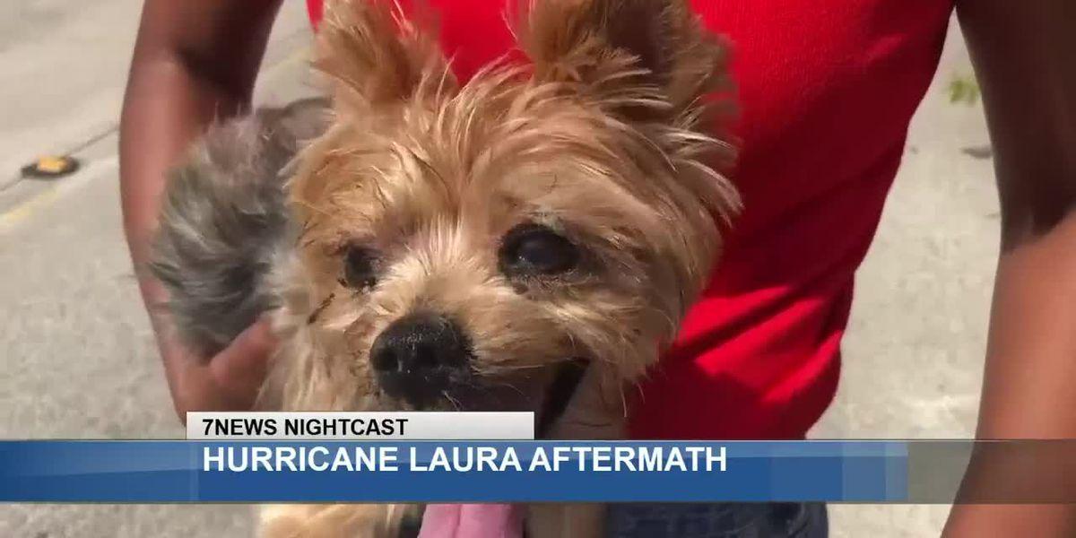 Pets' trauma from Hurricane Laura