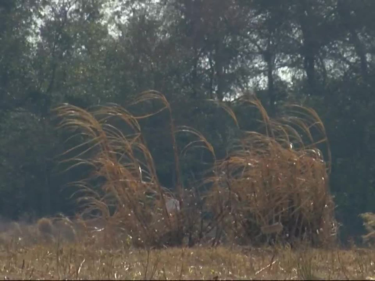 Harsh weather affects sugarcane crops in Louisiana
