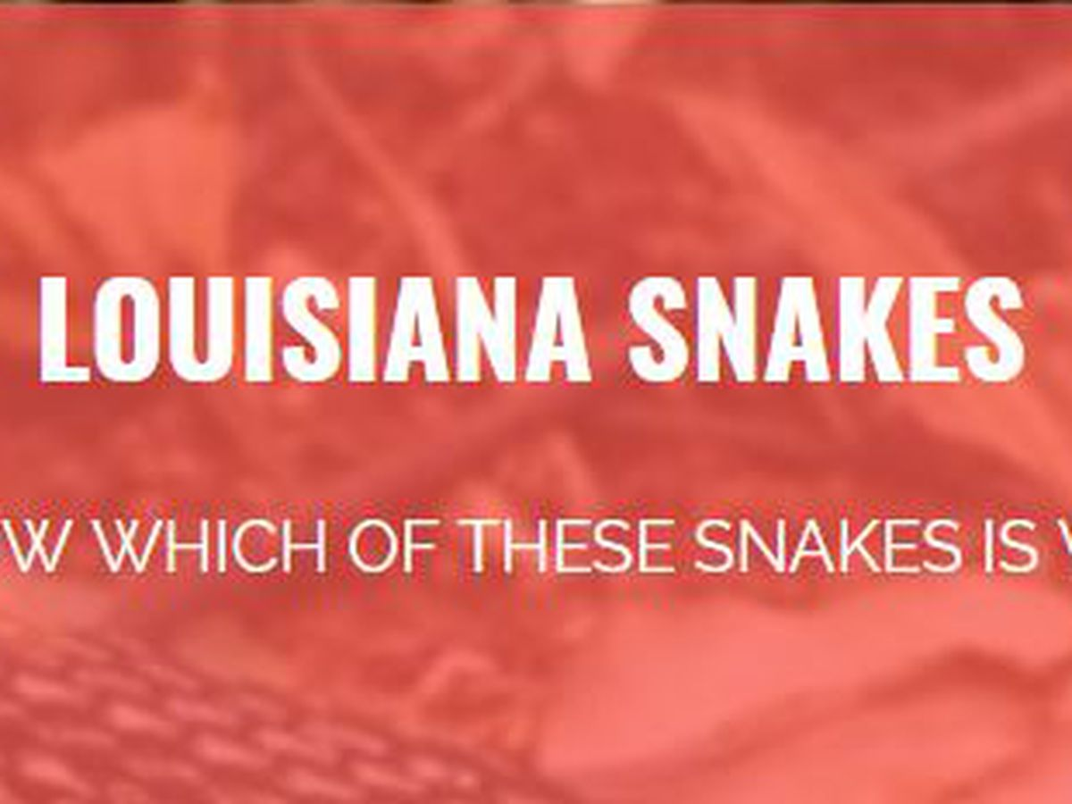 TAKE THE QUIZ: Is that snake venomous?